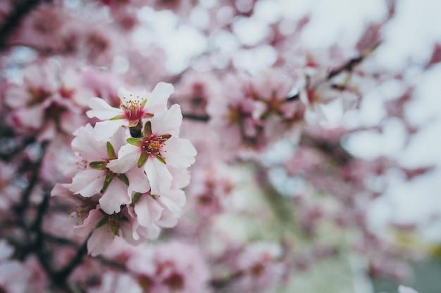 Jardin printanier en fleurs Photo Premium