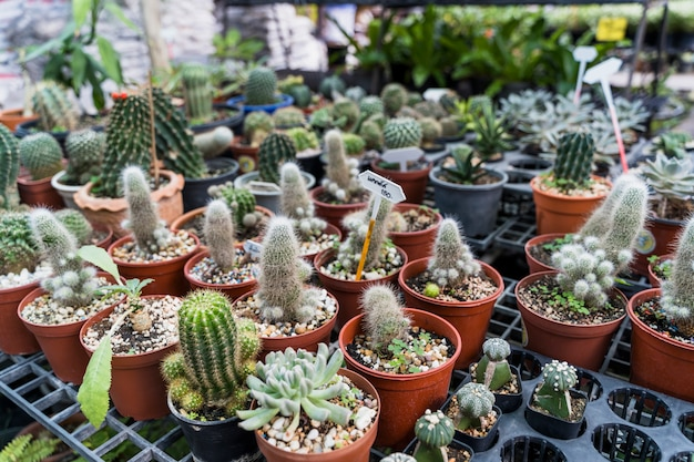 Jardinage Photo gratuit