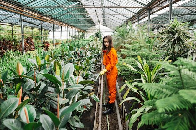 Jardinier femelle arroser les plantes avec un tuyau en serre Photo gratuit