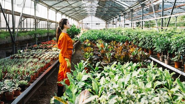 Jardinier femelle debout près de plantes poussant en serre Photo gratuit