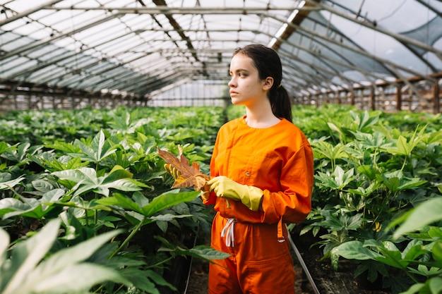 Jardinier femelle tenant une feuille de fatsia japonica jaune Photo gratuit