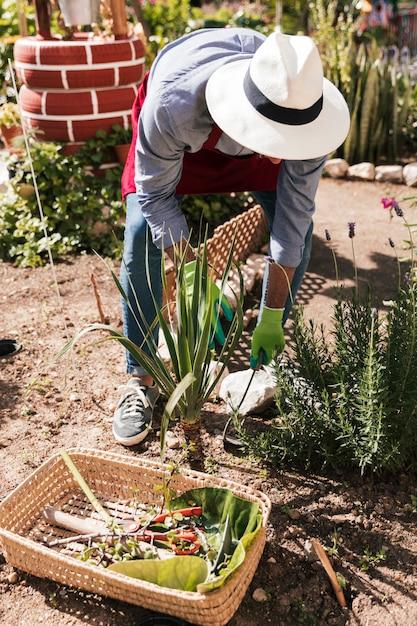 Un jardinier mâle coiffé d'un chapeau plantant des plantes dans le jardin Photo gratuit