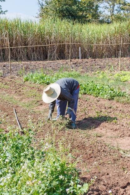 Jardinier paysan Photo Premium