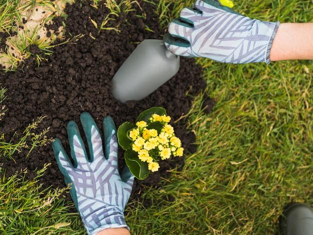 Jardinier plantant une plante succulente dans le sol Photo gratuit