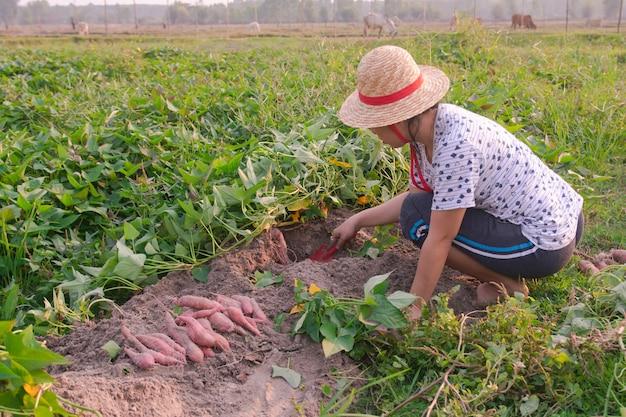 Jardinier récoltant des patates douces dans le jardin Photo Premium