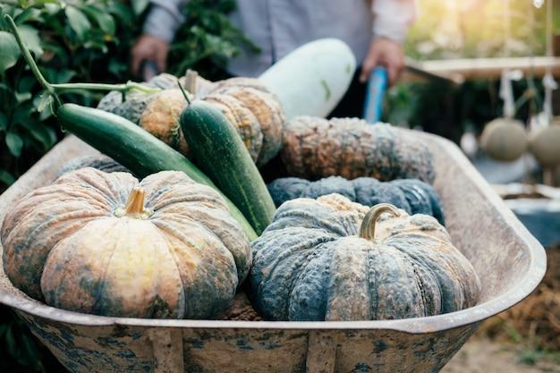 Jardinier récolte des légumes du jardin Photo Premium