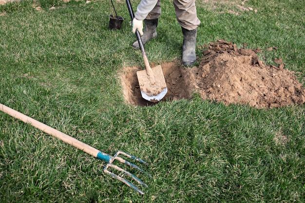 Le jardinier utilise une pelle pour planter de jeunes arbres fruitiers avec des racines pour multiplier les plantes mineures dans son verger. Photo Premium
