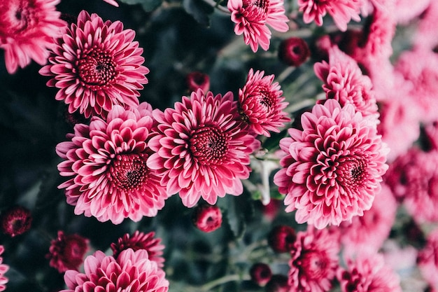 Jardins mamans Photo Premium