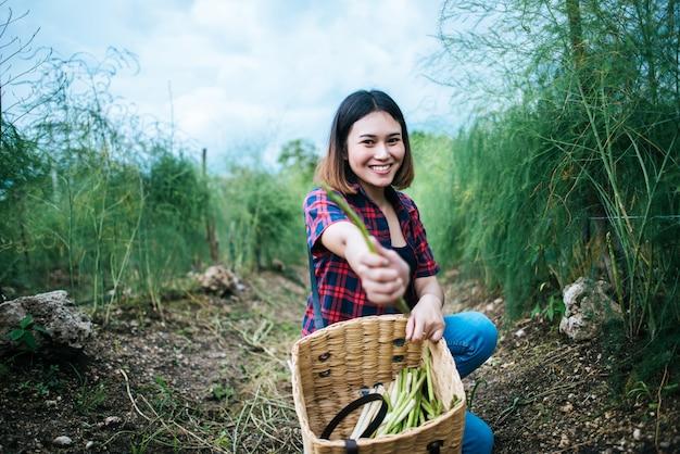 Jeune agriculteur récolte des asperges fraîches avec la main dans le panier. Photo gratuit