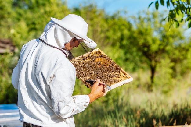 Jeune apiculteur travaillant dans le rucher. apiculteur récolte miel Photo Premium