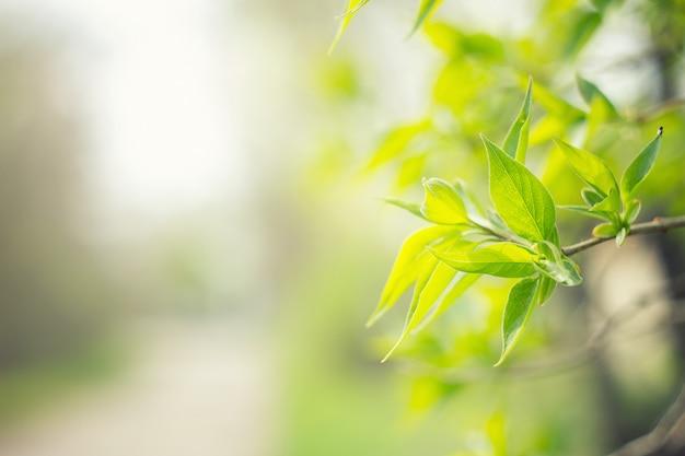 Jeune arbre feuille verte. fond flou vert naturel Photo Premium