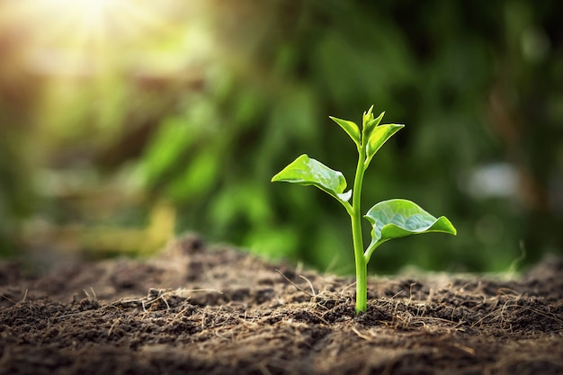 Jeune arbre qui pousse dans le jardin avec le lever du soleil. jour de la terre concept eco Photo Premium