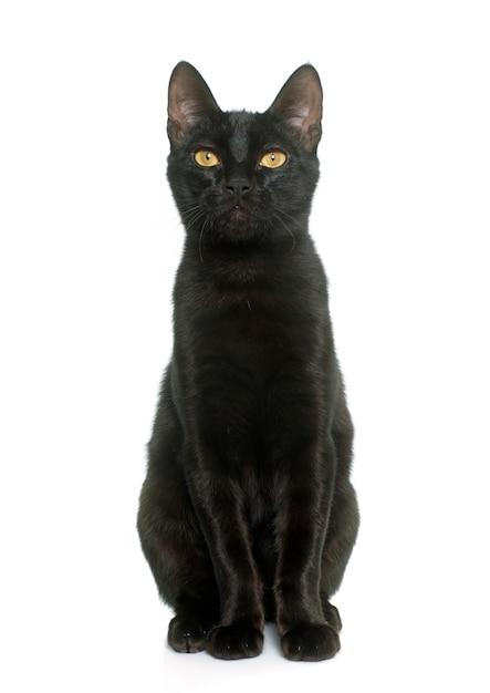 Jeune chat noir Photo Premium