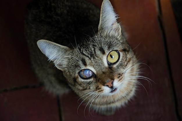Un jeune chat avec un œil abîmé regarde la caméra. Photo Premium