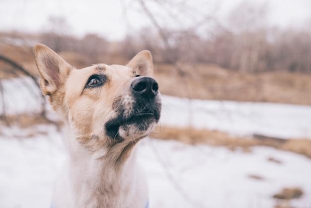 Jeune chien pédée en promenade Photo gratuit