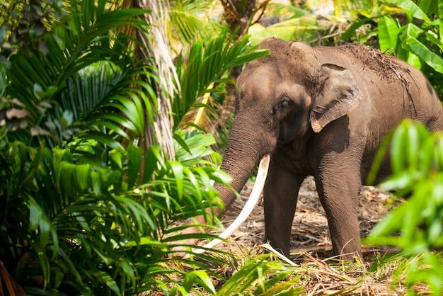 Jeune éléphant dans la jungle dans la forêt du sri lanka. Photo Premium