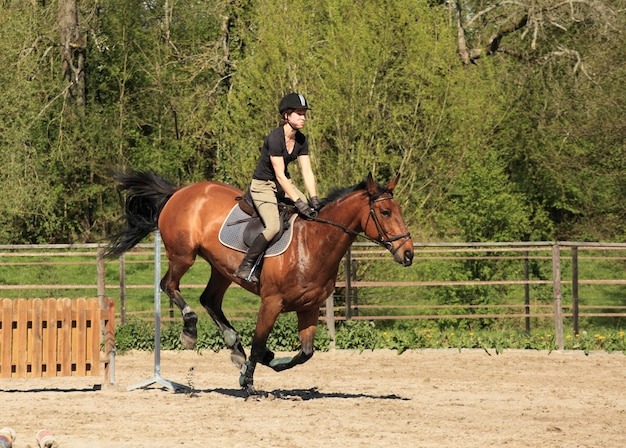 Jeune femme avec un cheval brun saute un obstacle Photo Premium