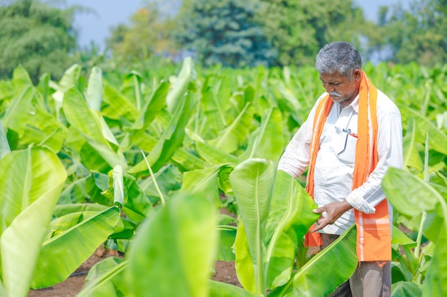 Jeune fermier indien au champ Photo Premium