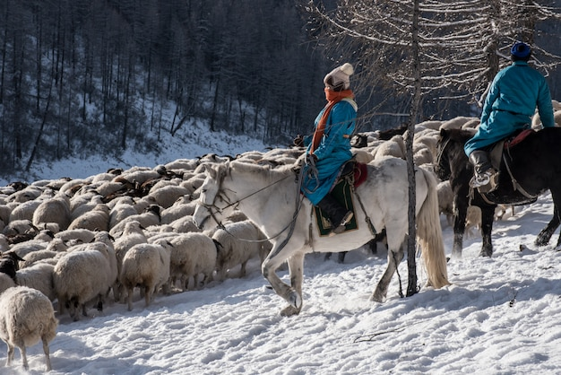 Jeune Fille Berger Assis Sur Un Cheval Et Un Troupeau De Moutons Dans La Prairie Avec Des Montagnes Enneigées Photo Premium