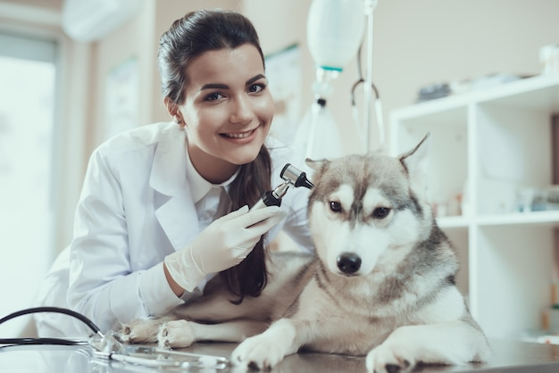 Jeune fille souriante vétérinaire avec otoscope et husky Photo Premium