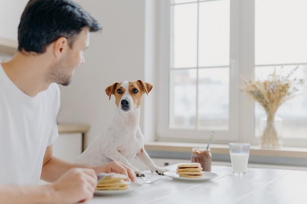 Jeune homme se détourne de la caméra, regarde attentivement le chien de race, déjeune ensemble, mange de délicieux pancakes à la table de la cuisine, utilise des fourchettes, pose dans une salle spacieuse et lumineuse avec une grande fenêtre Photo Premium