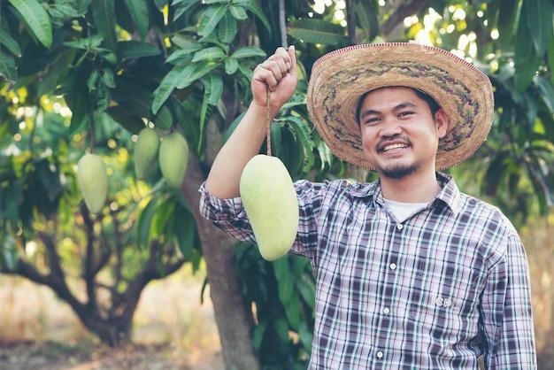 Jeune paysan asiatique cueillant et montrant des mangues dans une ferme biologique, thaïlande Photo Premium