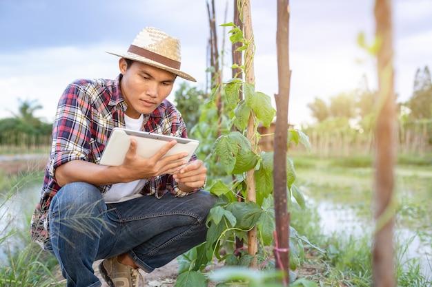 Jeune paysan asiatique utilisant une tablette et vérifiant sa plante ou son légume Photo Premium