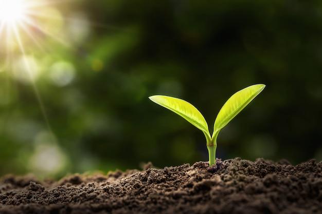 Jeune plante poussant dans la lumière du matin. concept de l'agriculture et de la journée de la terre Photo Premium