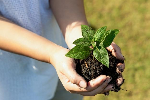 Jeune Plante Pousse D'arbre Dans La Main De La Femme. Photo Premium