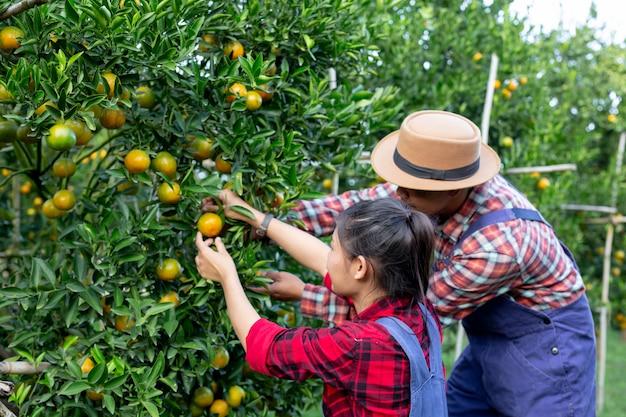 Les jeunes agriculteurs récoltent l'orange Photo gratuit