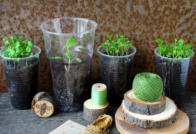 Jeunes plants d'alto Photo Premium