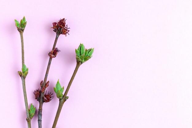 Jeunes pousses sur fond rose clair. Photo Premium