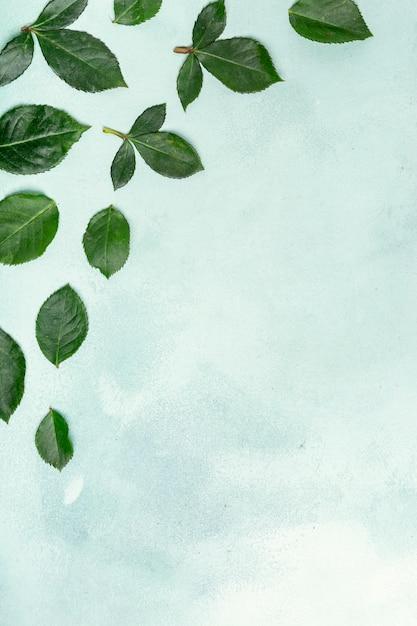 Joli arrangement de feuilles avec espace de copie Photo gratuit