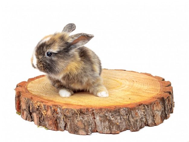 Joli bébé lapin sur pin scié en bois Photo Premium