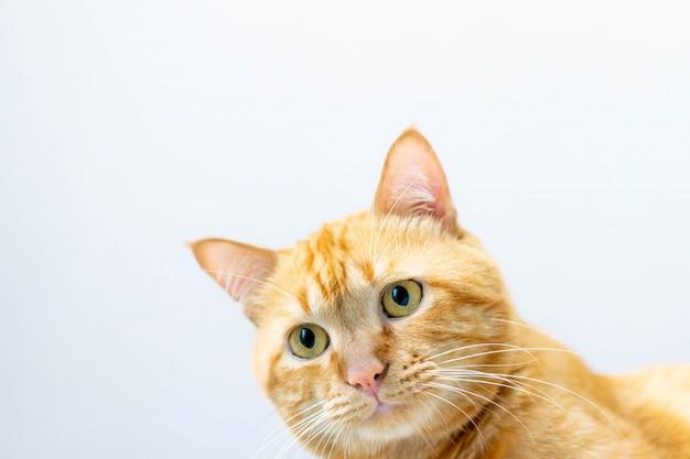 Un joli chat chez moi Photo Premium