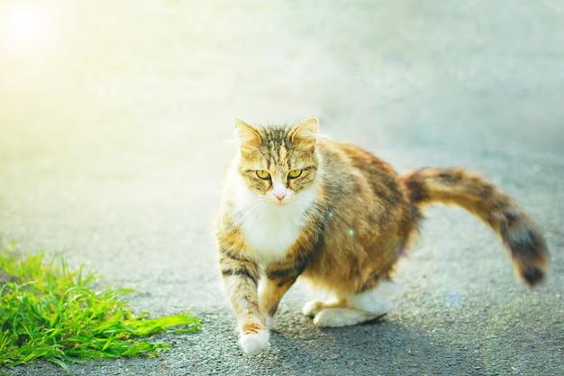 Un joli chat domestique blanc moelleux gris brun à l'extérieur ou dans un parc Photo gratuit
