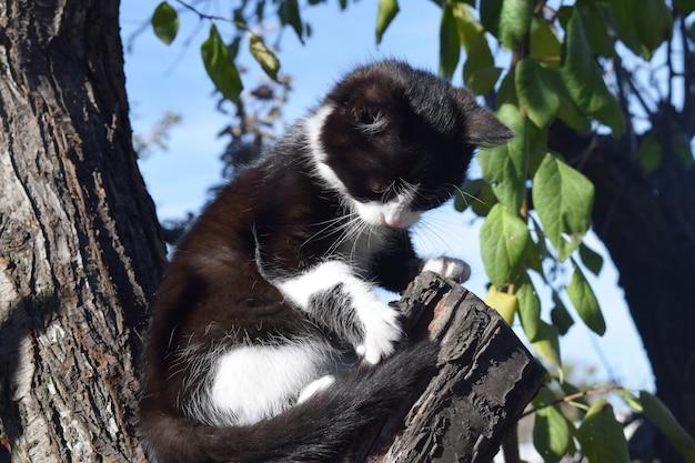 Joli chat à fourrure dans la rue, regardant le propriétaire Photo Premium