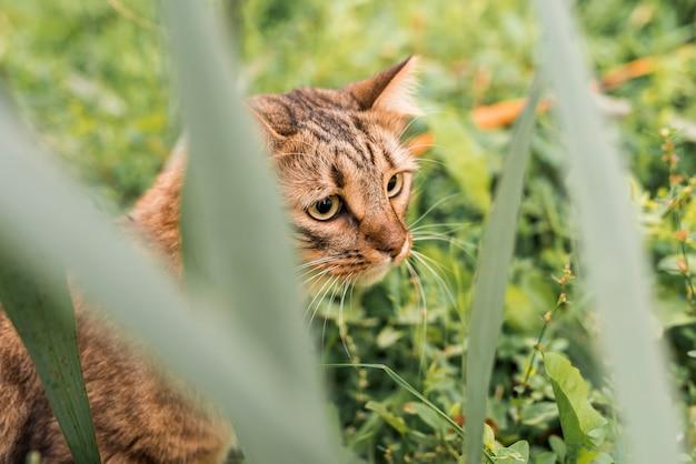 Joli chat tigré dans le parc Photo gratuit
