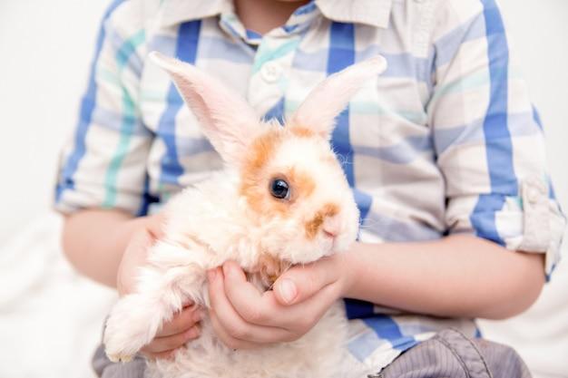 Joli petit lapin aux grandes oreilles Photo Premium