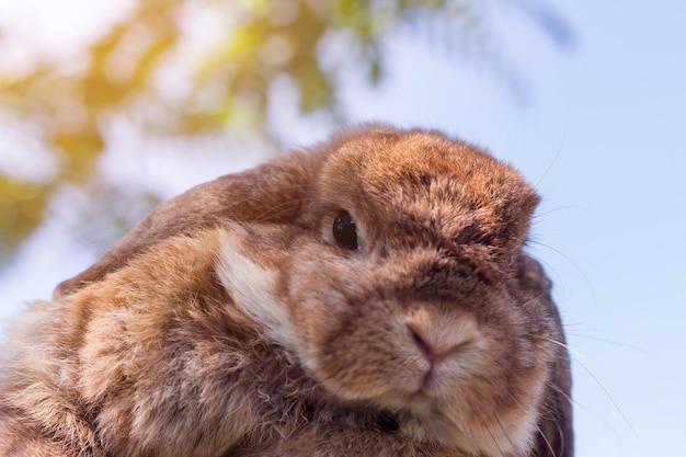 Joli petit lapin sur l'herbe verte au soleil Photo Premium
