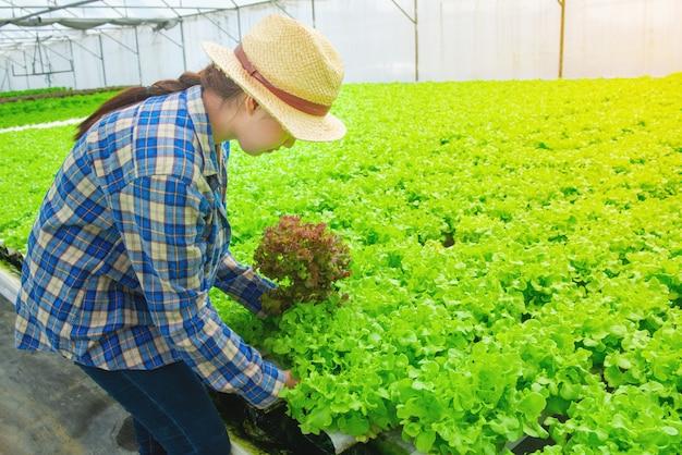 Jolie jeune agricultrice asiatique qui travaille dans la ferme hydroponique de légumes. elle cherche et utilise ses mains pour vérifier la qualité de la laitue verte. Photo Premium