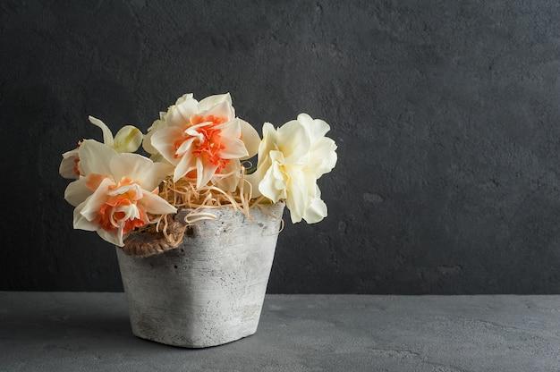 Jonquilles en pot de fleurs sur fond de béton foncé Photo Premium