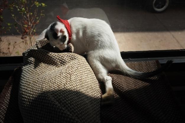 Jouer le chat mignon dans le tapis Photo Premium