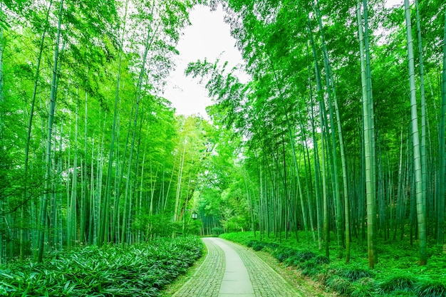 Jour de la croissance de la nature de la nature de la forêt Photo gratuit
