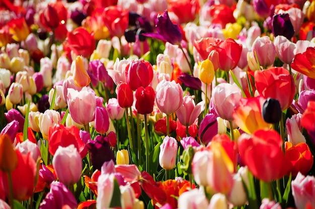 Journée de la femme. la saint valentin. printemps Photo Premium