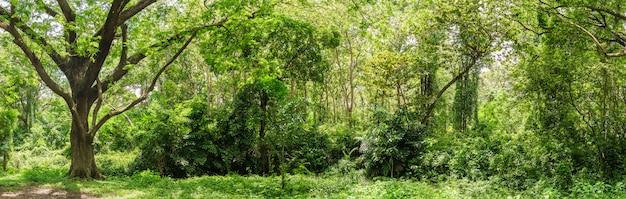 Jungle de forêt tropicale panoramique en thaïlande Photo Premium