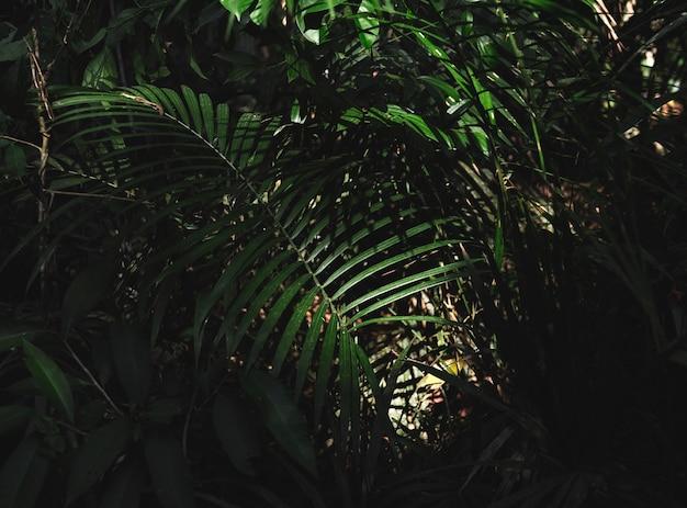 Jungle de la forêt verte avec des feuilles de palmier Photo gratuit