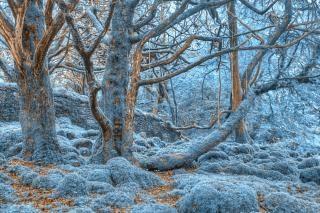 Killarney forêt colorée hdr Photo gratuit