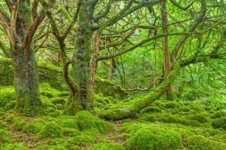 Killarney forêt hdr extérieur Photo gratuit