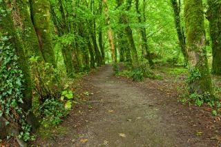 Killarney park chemin forestier hdr éco Photo gratuit